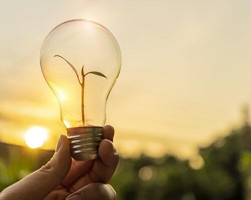 närbild på glödlampa med litet träd inuti, oskärpa landskap med sol i bakgrunden